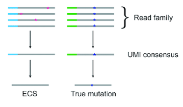 Alignment of read families sorted by UMIs allows for the discrimination of rare variants from protocol artifacts introduced during PCR or sequencing procedures