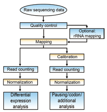 Flow-chart of data analysis in ribosome profiling